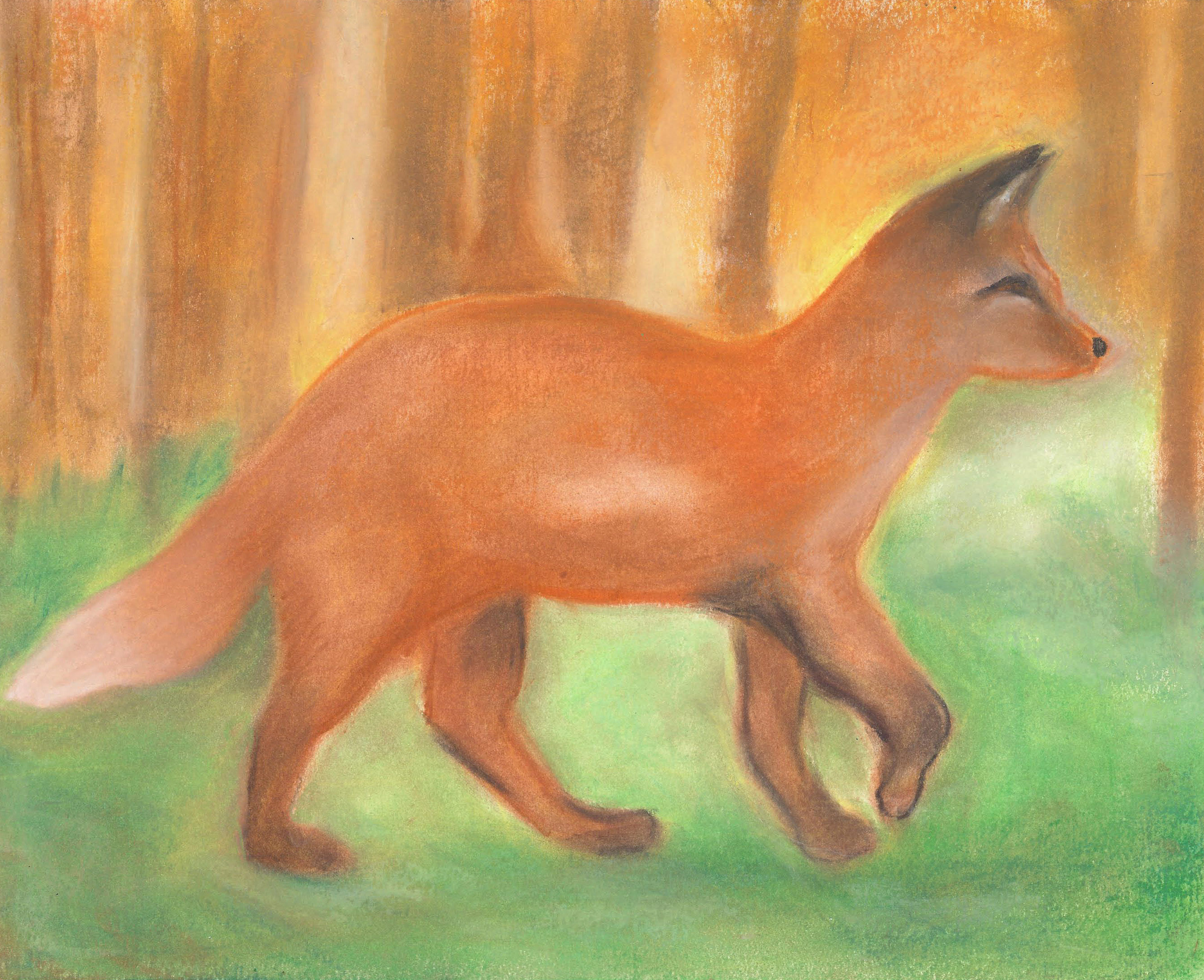 A Fox in the Woods - Oil Pastel 11 X 14 - $200
